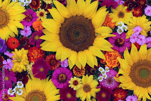 Photo Stands Floral flower greeting card concept. bright summer image.