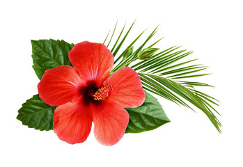 Fototapeta Egzotyczne Hibiscus flower with palm leaf in floral tropical composition