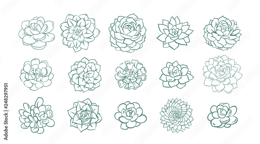 Fototapeta Set of hand drawn line succulent plant isolated on white background. Vector illustration