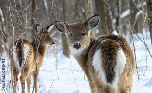 deer in forest during winter Canvas Print