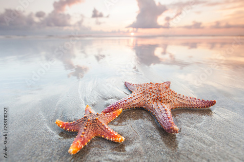 Obraz na plátně Two starfish on a summer beach