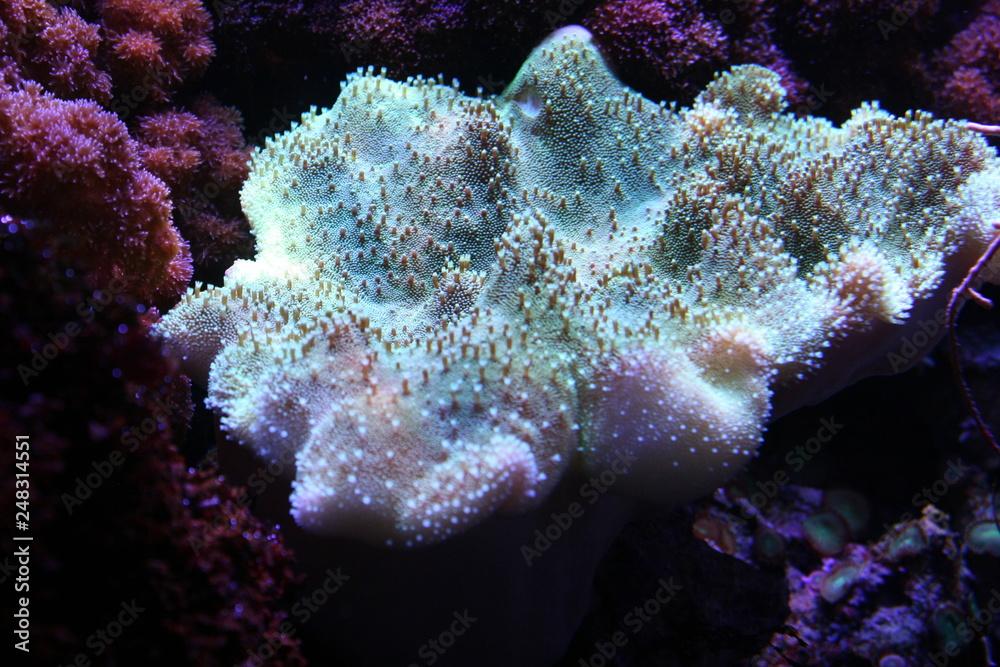 Fototapeta Piekno podwodnego świata