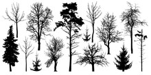 Forest Trees Without Leaves. W...