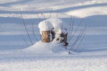 Winter Trees Stumps Nature Landscape