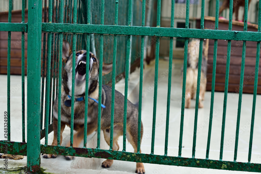 A dog locked in a cage of animal shelters.