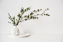 Eucalyptus Branches In White C...