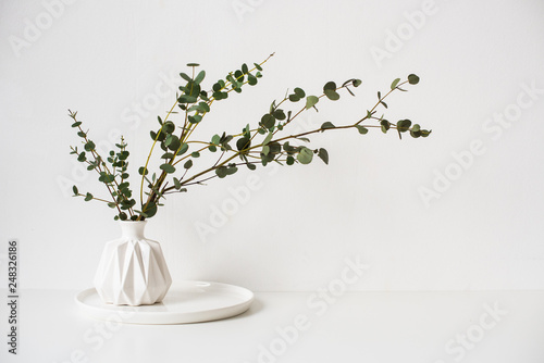 Fotografia  Eucalyptus branches in white ceramic vase on empty wall background
