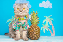 Cute Cat Shirt On Vacation Against The Backdrop Of Pineapple And Palm Trees. The Concept Of Rest, Relaxation And Travel