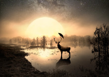 Surreal Photo Of A Deer In A Lake