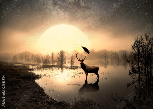 Poster Cerf Surreal photo of a deer in a lake