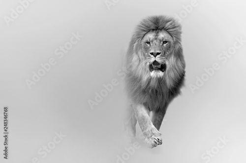 Door stickers Lion african lion the great king of the animal kingdom african wildlife