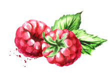 Group Of Two Ripe Raspberries With Green Leaves. Watercolor Hand Drawn Illustration, Isolated On White Background