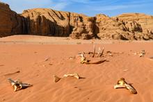 Kości Wielbłąda Na Pustyni. Wadi Rum, Jordania