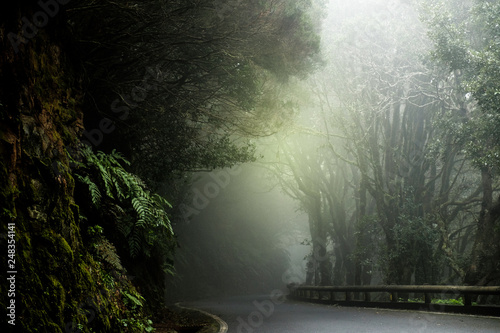 Foto auf Leinwand Olivgrun Foggy abandoned street deep into the Anaga mountains.