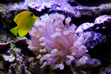 Koralowce w akwarium