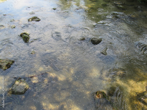 Aluminium Prints Forest river A rocky river bed leading to the ocean