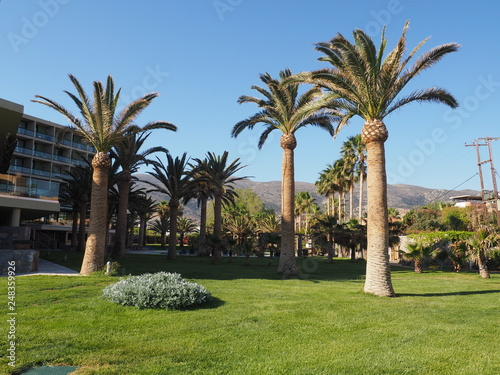 landscape garden hotel resorts beautiful tree palm, traditional decoration Canvas Print