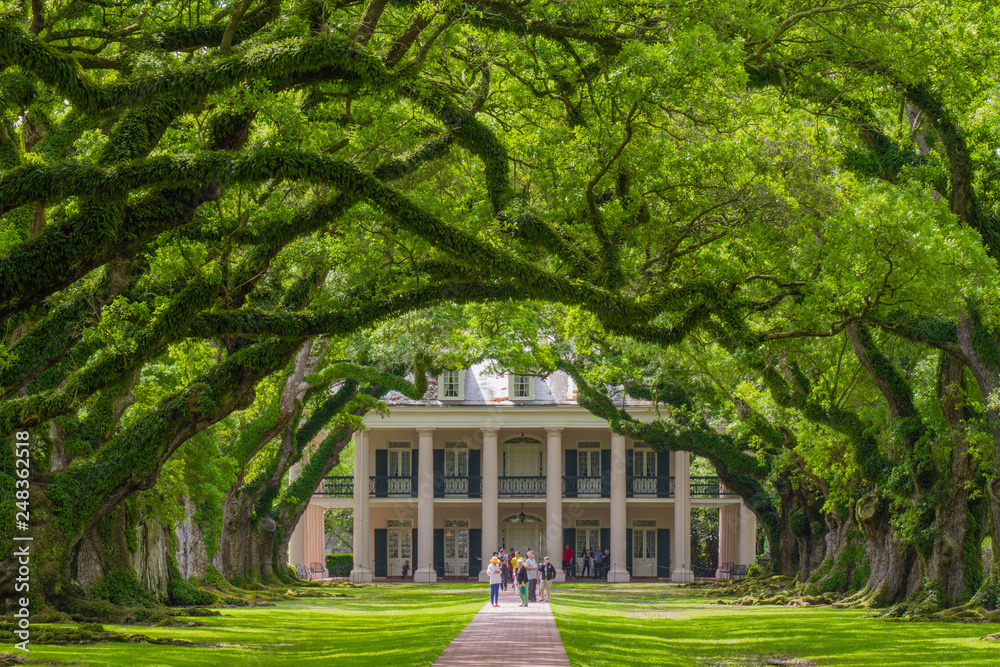 Fototapety, obrazy: Oak Alley Plantation, Vacherie, St. James Parish, Louisiana, United States - March 30, 2018: Color landscape photo with canopy of oak trees leading to house and people on path and on balcony of house.