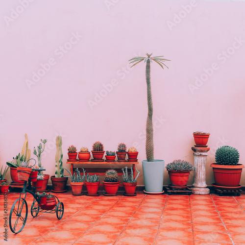 Photo  Home plants decor