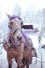 Horse Drawn Carriage On A Snow...