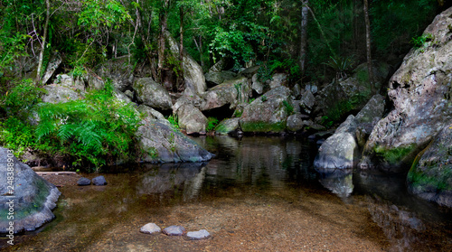 Fotomural A calm tropical creek with the cleanest pristine water slowly  flows among mossy rocks in the rainforest