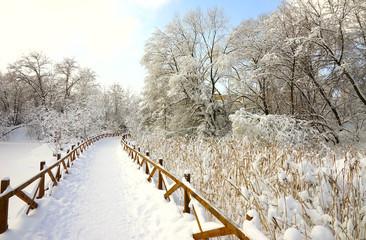 Ścieżka w winter park, płochy i gałąź w śniegu, niebieskie niebo.