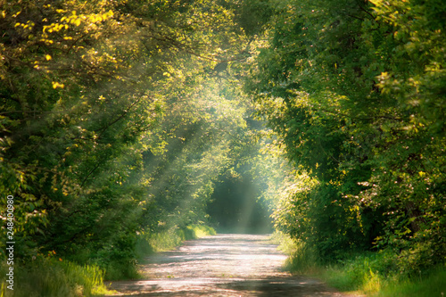 Spoed Foto op Canvas Weg in bos Sunny spring or summer landscape in green park with block road, selective focus