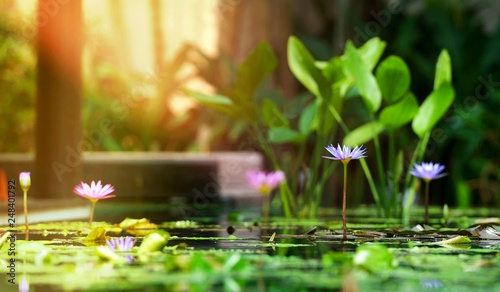Deurstickers Waterlelies Abstract landscape of lotus pond at moning with sunrise