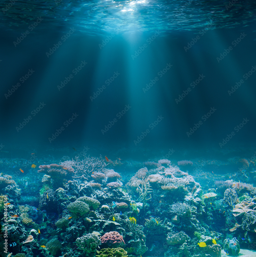Fototapety, obrazy: Sea or ocean seabed with coral reef. Underwater view.