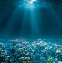 Sea Or Ocean Seabed With Coral...