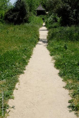 Foliage-lined path Canvas Print