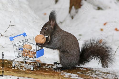 Fotografía Eichhörnchen beim einkaufen