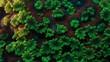 Sunset Montipora Coral Polyp Macro Timelapse HD