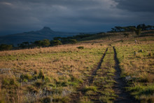 A Track Leads Across A Grassy Plain Towards The Hazy Mountains In The Distance, Lit Up By The Late Evening Sun. Drakensberg, South Africa