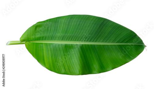 Fotografie, Tablou  Fresh whole banana leaf isolated on white background