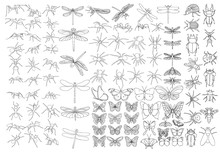 Set Of Sketches Of Insects, Is...