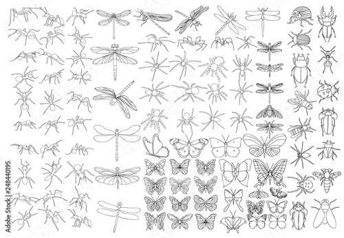 Fotografija set of sketches of insects, isolated, vector