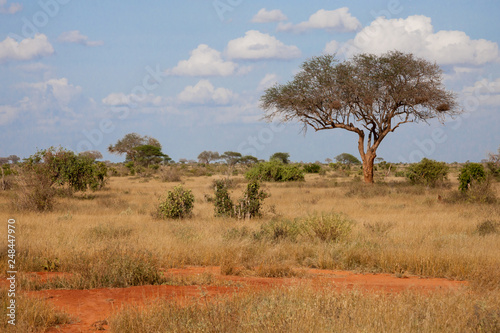 A big tree in the savannah between another plants © 25ehaag6