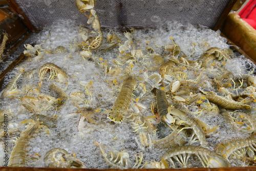 Fresh mantis shrimp