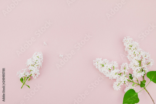 Foto op Plexiglas Lilac Pink background with white lilac flowers