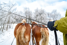 Fahrt Mit Dem Pferdeschlitten In Masuren Im Winter