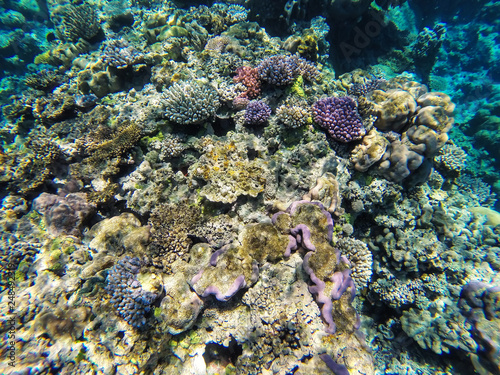 Coral reef off the coast of Gee island in Ouvea lagoon, Loyalty Islands, New Caledonia