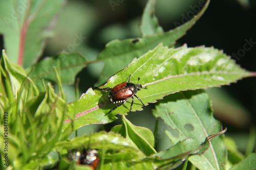 Fotografie, Obraz  insect on leaf