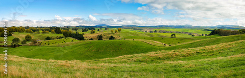 Obraz High resolution panoramic landscape with green hills in New Zealand, northern island - fototapety do salonu