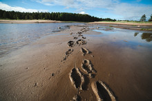 Footprints In Sand At Low Tide...