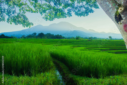 Deurstickers Groene the beauty of mountain frames in trees, with the morning atmosphere in Indonesian rice fields