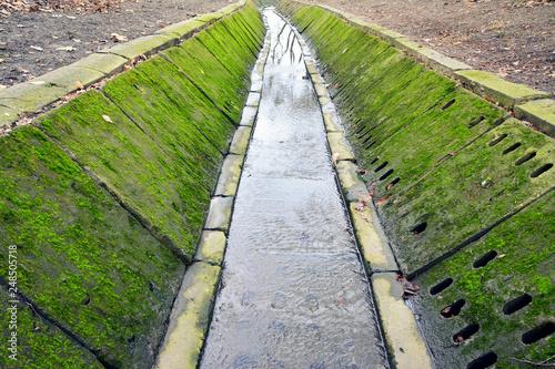 Fotografie, Obraz Piękny zielony mech