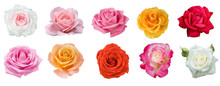 Red,yellow,cream,white,pink Ro...
