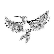 Vector Illustration Hummingbir...