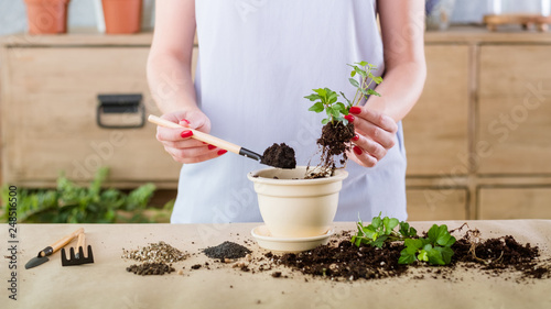 Fotografie, Obraz  Vegetative plant reproduction